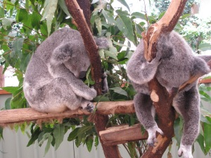 two asleep in a tree