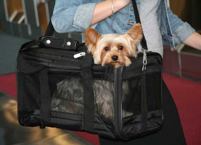 Flying-With-Dogs-Airline-Approved-Dog-Crates-and-Carriers-2