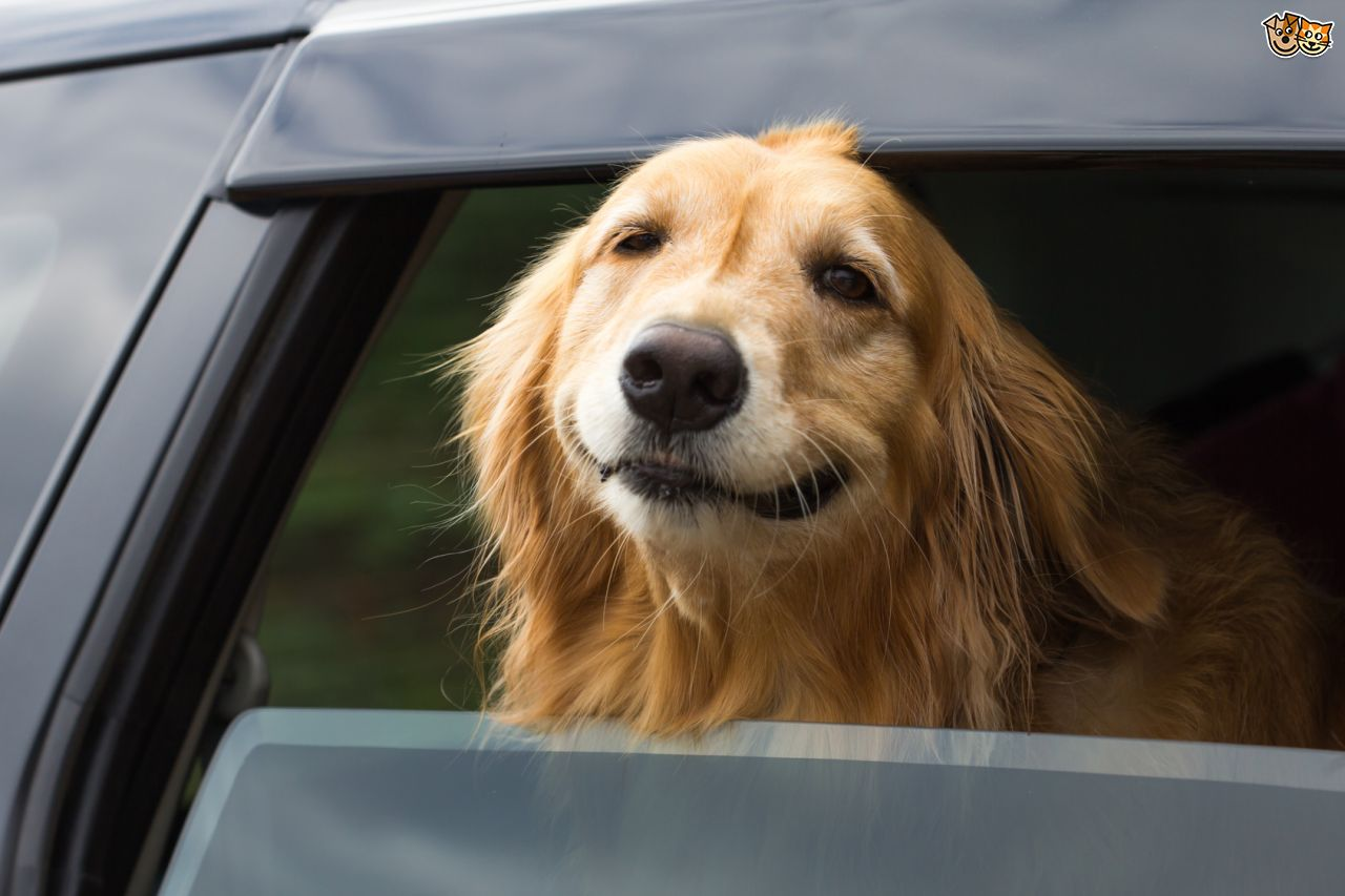 10 Ways to Safely Travel With Your Pet This Summer